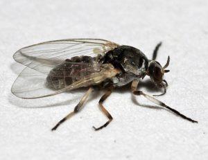 Insektenforum